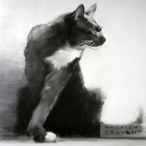 Meewah cats